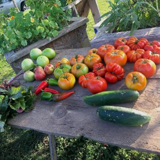 Ripe and semi-ripe tomatoes, cucumbers, and other produce on an outdoor picnic table